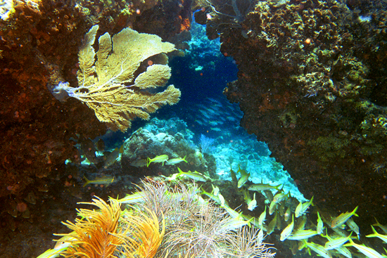 Florida Keys Reef 2